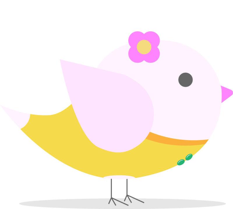 20代のメスの小鳥